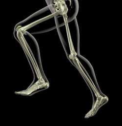 Leg Length image