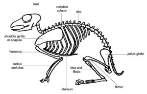 Anatomy of the Spine - Back Pain in Animals