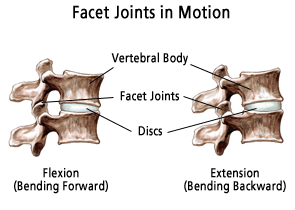 where is the facet joint?
